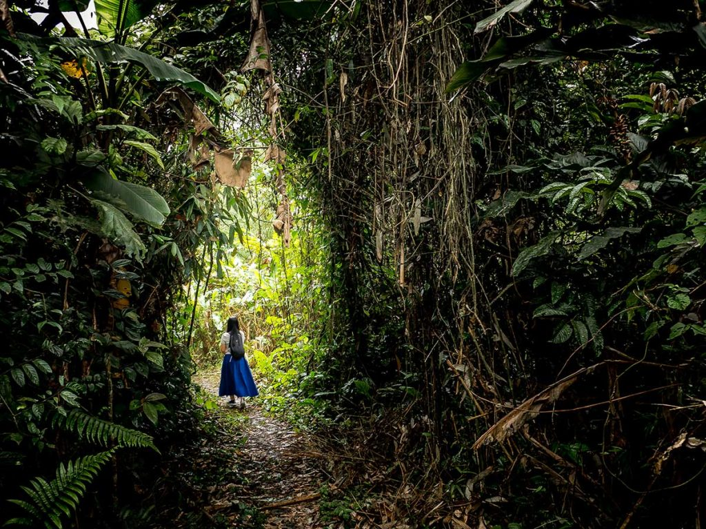 Cuc Phoung National Park